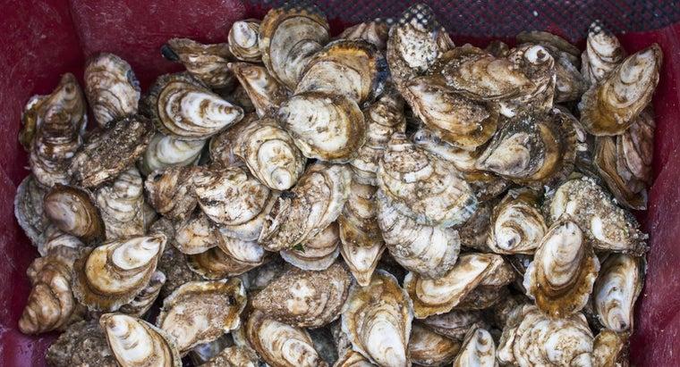many-oysters-bushel