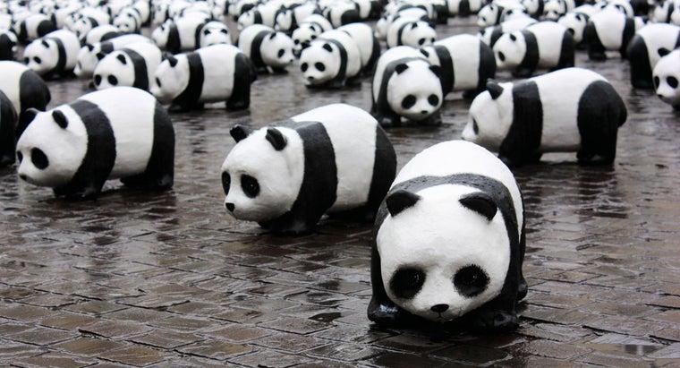 many-pandas-left-world