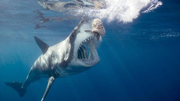How Many People Get Eaten by Sharks in a Year?