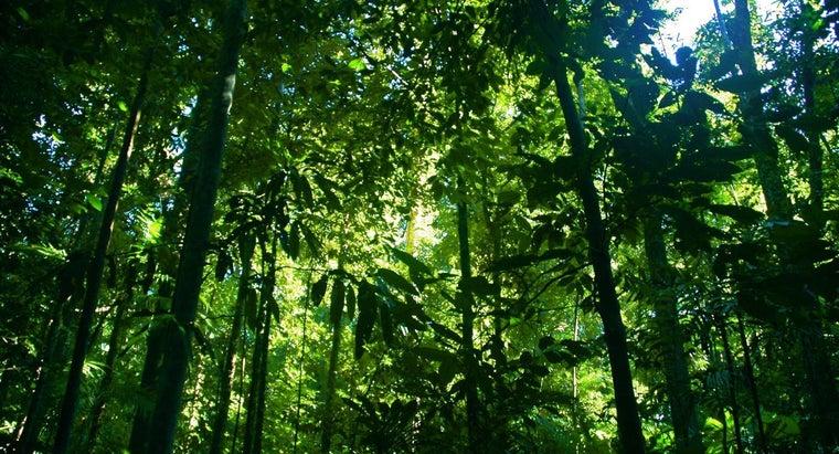 many-rain-forests-left-world