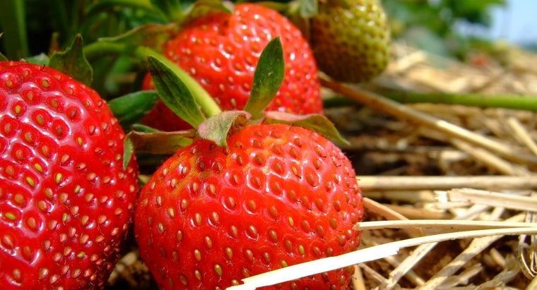 many-seeds-strawberry