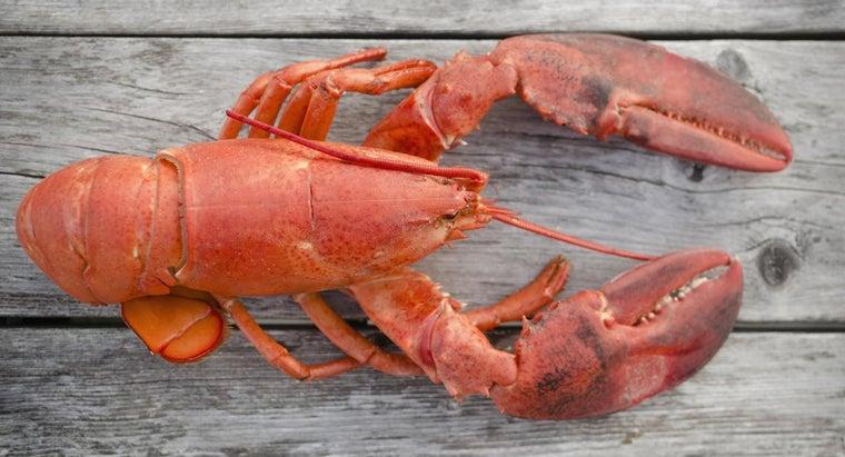 many-segments-crustacean-s-body-appendages