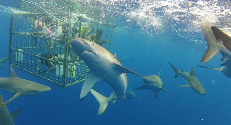 many-sharks-world