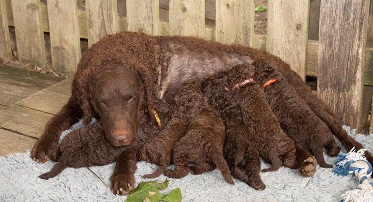 many-teats-dog