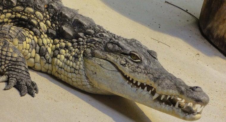 many-teeth-crocodile