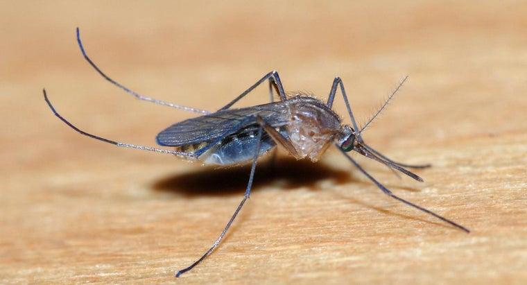 many-teeth-mosquito