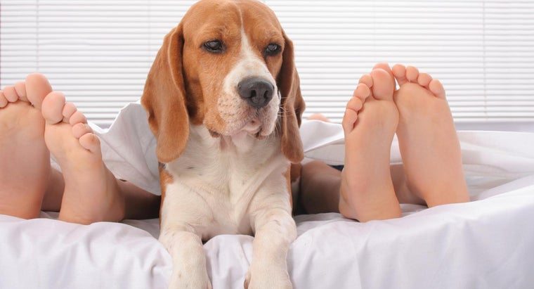 many-toes-dogs