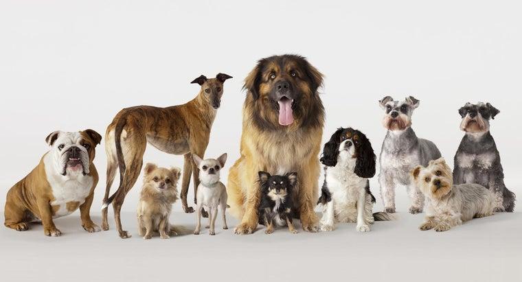 many-types-dogs