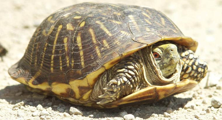 many-types-turtles