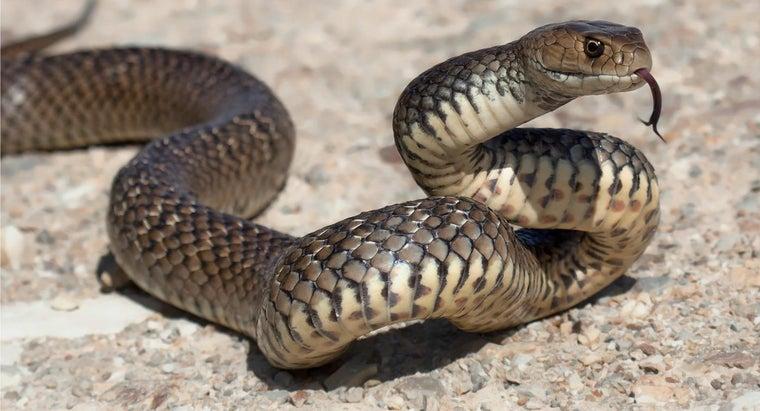 many-types-venomous-snakes-live-australia
