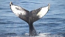 How Many Types of Whales Are There?