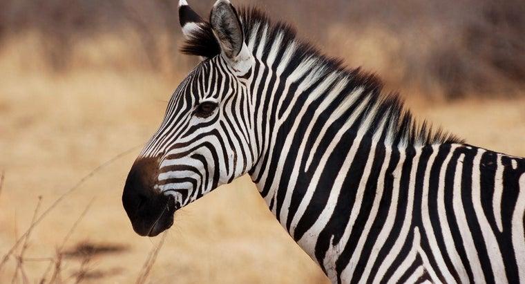 many-types-zebras