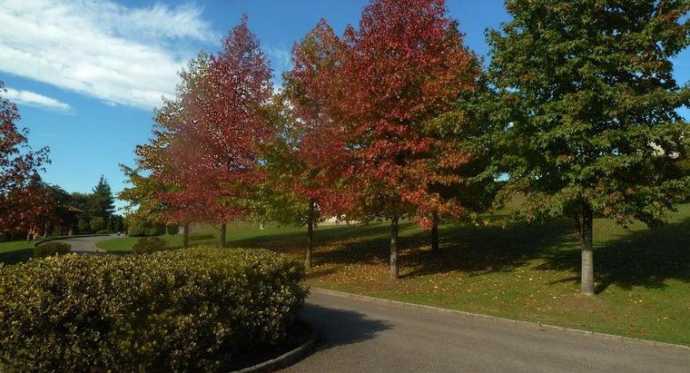 maple-trees-grow