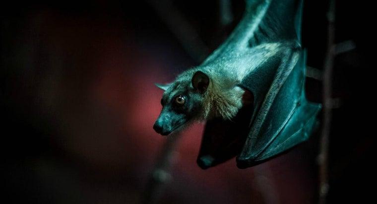 mascara-made-out-bat-guano