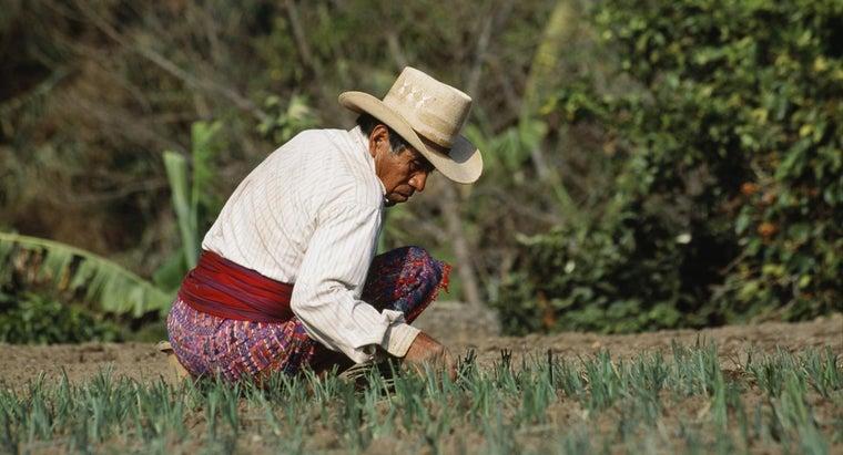 did-mayan-people-farm