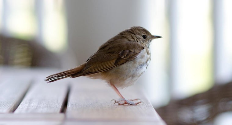 What Does It Mean When a Bird Flies Into Your House? | Reference com