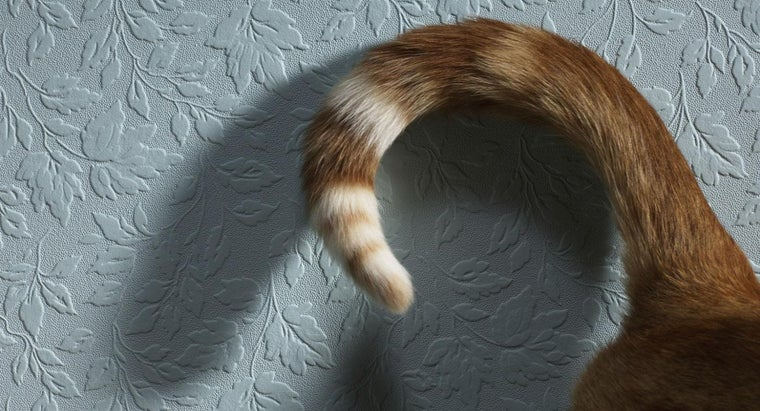 mean-cat-wags-its-tail