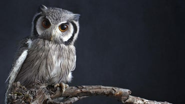 What Does It Mean When You Dream About Owls?