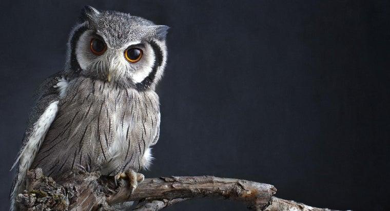 mean-dream-owls
