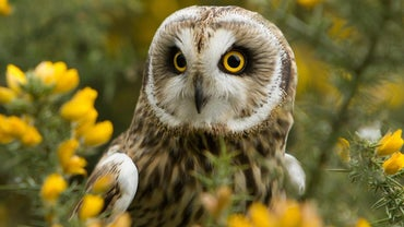 What Does It Mean When Someone Sees an Owl During the Day?