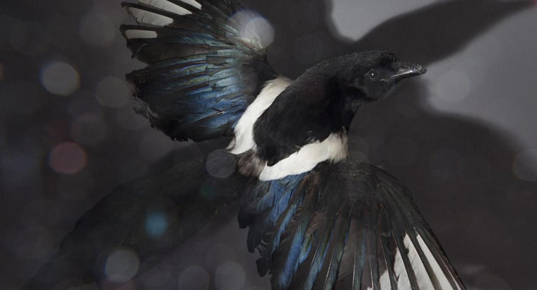 meaning-black-feather