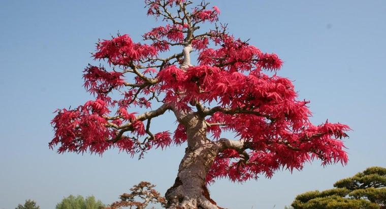 meaning-bonsai-tree