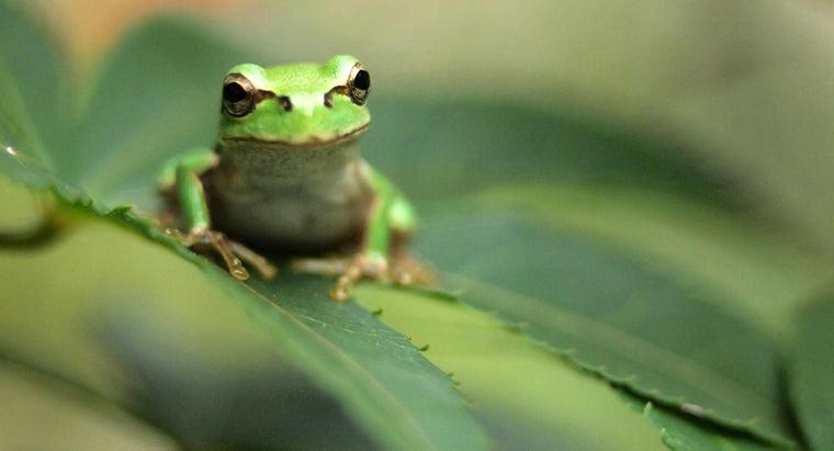 meaning-frogs-dream