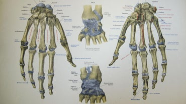 How Do You Memorize the Names of the Carpal (wrist) Bones?
