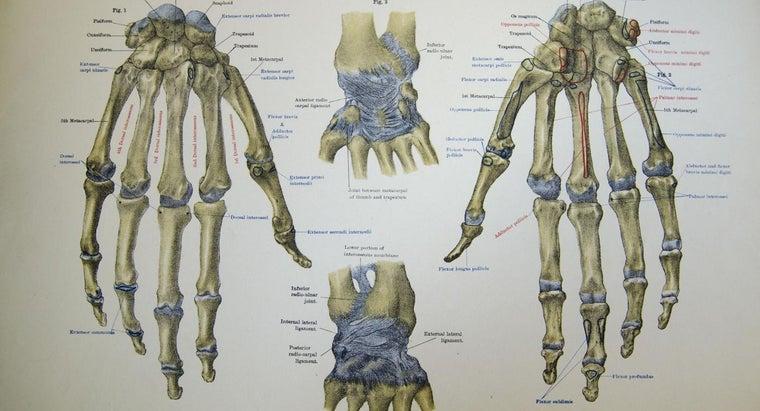 memorize-names-carpal-wrist-bones