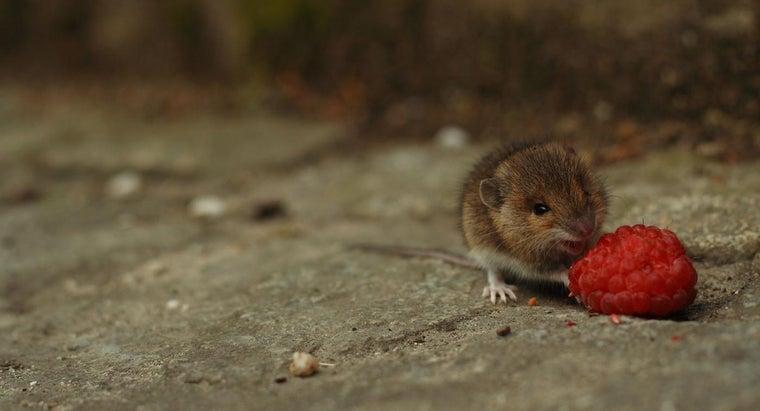 mice-carnivores-herbivores