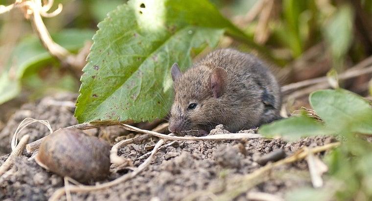 mice-live