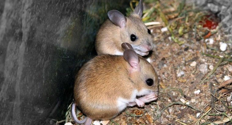 mice-squeak