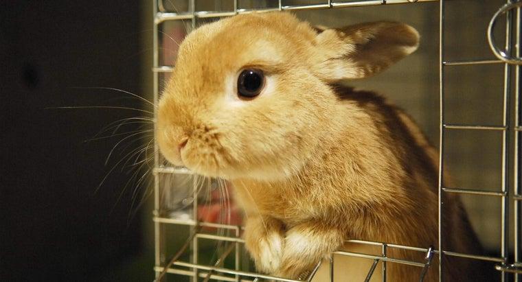 mini-bunnies