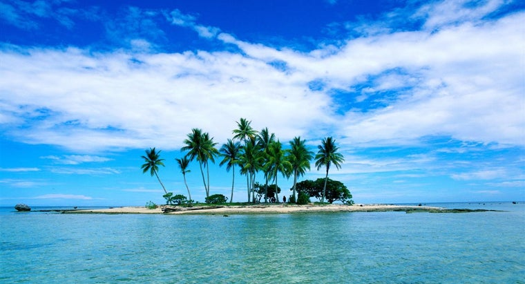 miniature-palm-tree