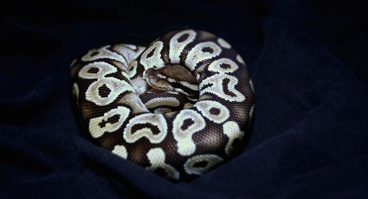 mohave-ball-python