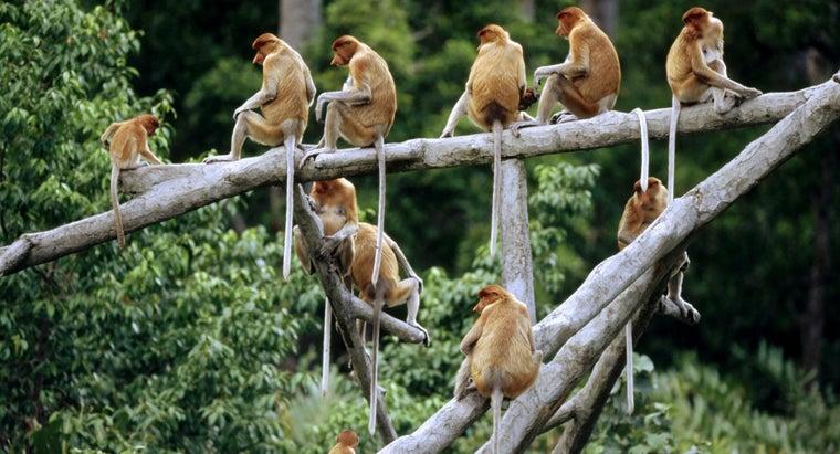 monkey-live