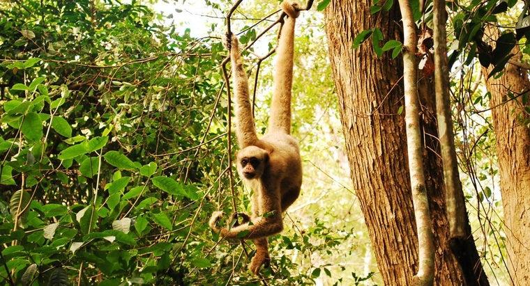 monkeys-survive-jungle