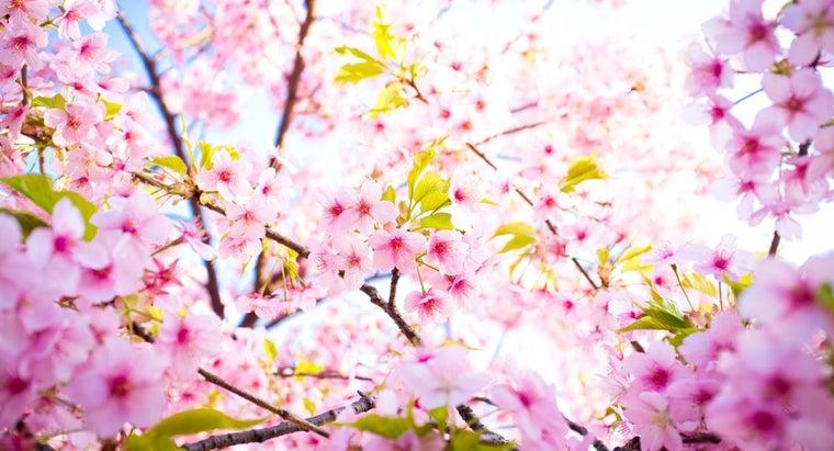 month-spring-start
