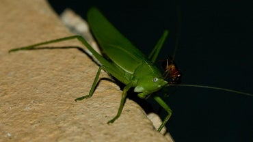 "What Is the Moral of the Story ""The Ant and the Grasshopper""?"