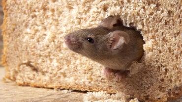Do Mothballs Keep Mice Away?