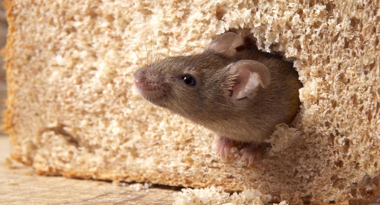 mothballs-keep-mice-away