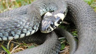 Do Mothballs Repel Snakes?