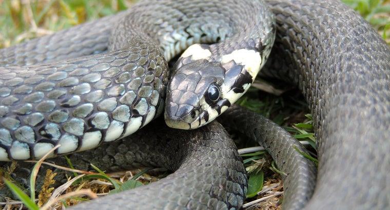 mothballs-repel-snakes