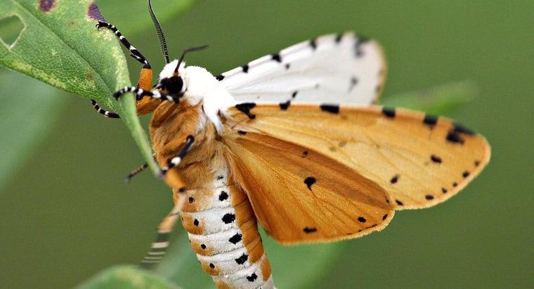 moths-eat