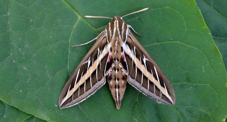 moths-live