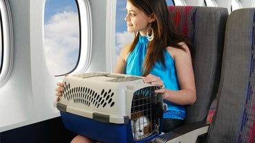 How Much Do Airlines Charge for Flying a Pet?