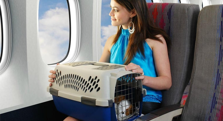 much-airlines-charge-flying-pet