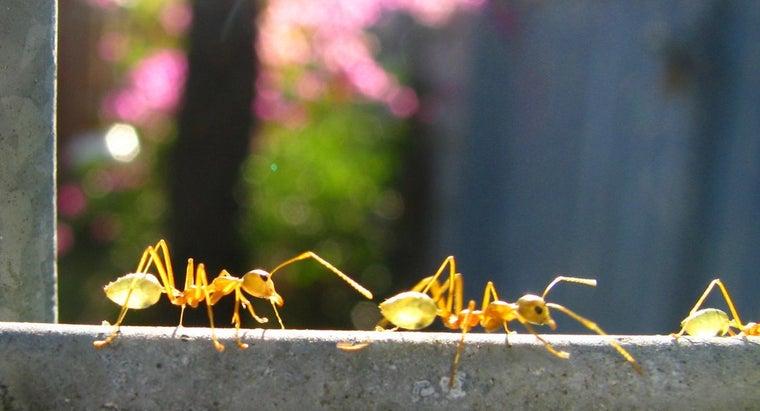much-ants-weigh