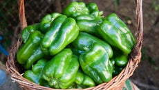 How Much Does a Bell Pepper Weigh?