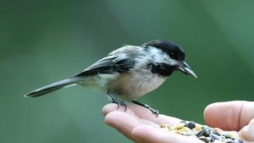 How Much Do Birds Eat?